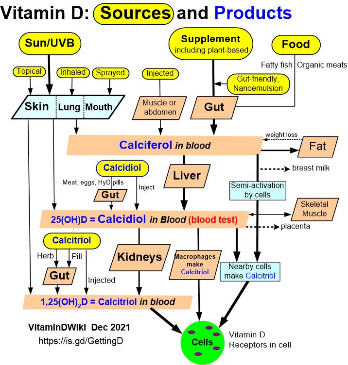 Activated Vitamin D Calcitriol Substantially Reduced Elderly Blood