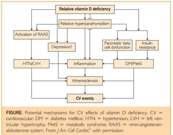 Overview Cardiovascular and vitamin D |