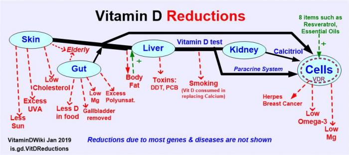 Resveratrol improves health (Vitamin D receptor, etc ) |