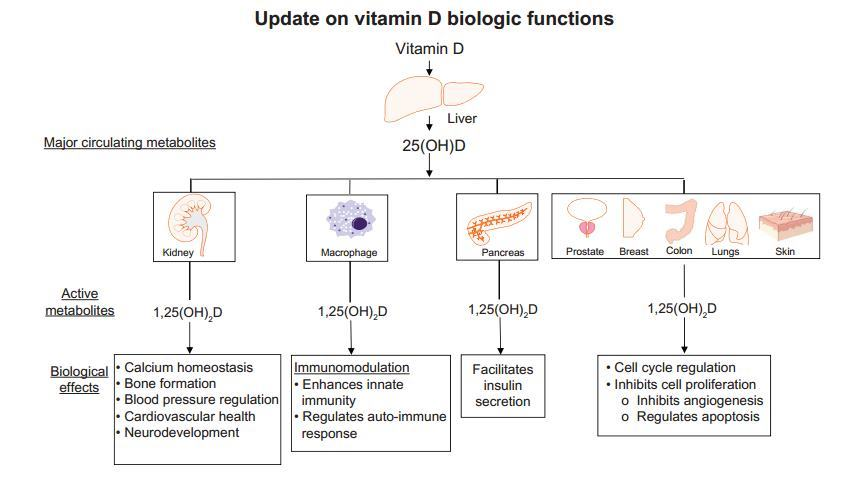 Biological Functions of vitamin D at is.gd/gJ31a4