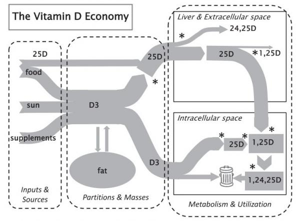 Vitamin D diagram is.gd/heaney2014