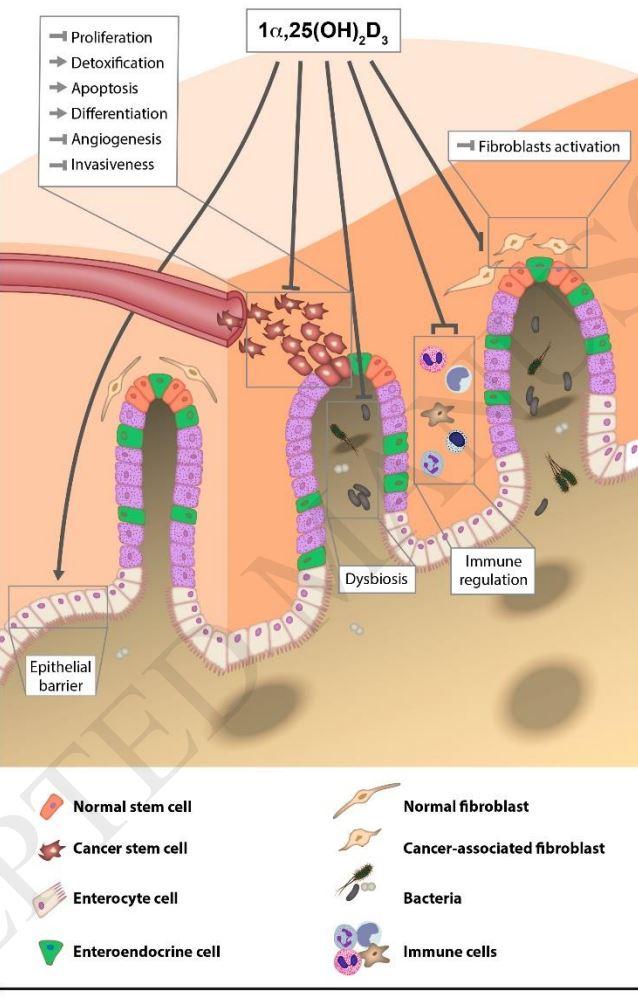 Pancreatic cancer vitamin d - Rectal cancer vitamin d