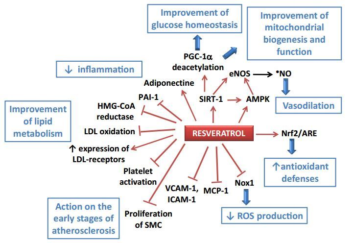 Resveratrol and Cardiovascular Diseases – May 2016 |