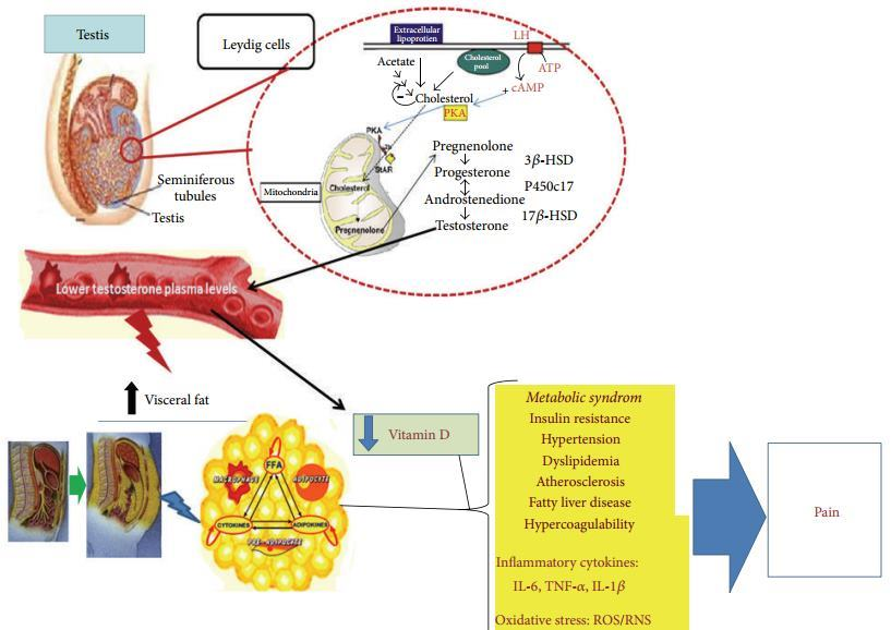 Testosterone, vitamin D and inflammation – March 2013