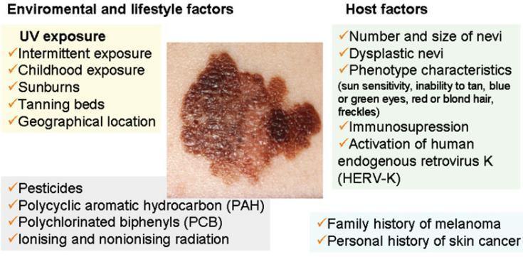 Sunlight Vitamin D And Skin Cancer 2nd Edition Aug 2013 Vitamindwiki