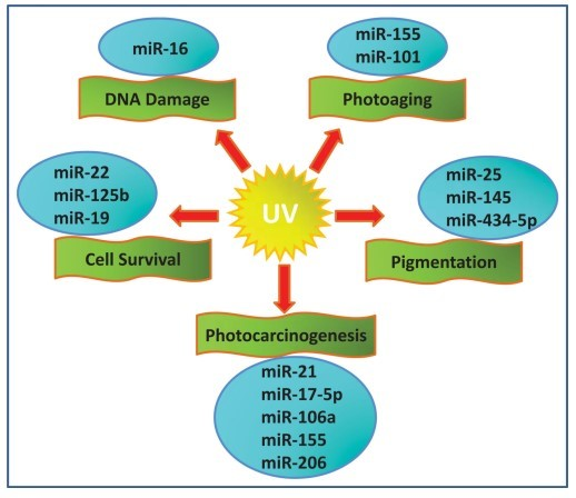 Sunscreen in a pill with low spf vitamin d wiki solar ultraviolet uv radiation an ubiquitous environmental carcinogen is classified depending on the wavelength into three regions ccuart Images