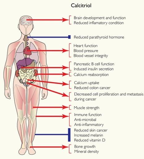 Calcitriol Hormone Function