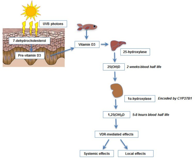 Vitamin D Immunity And Microbiome Dec 2014