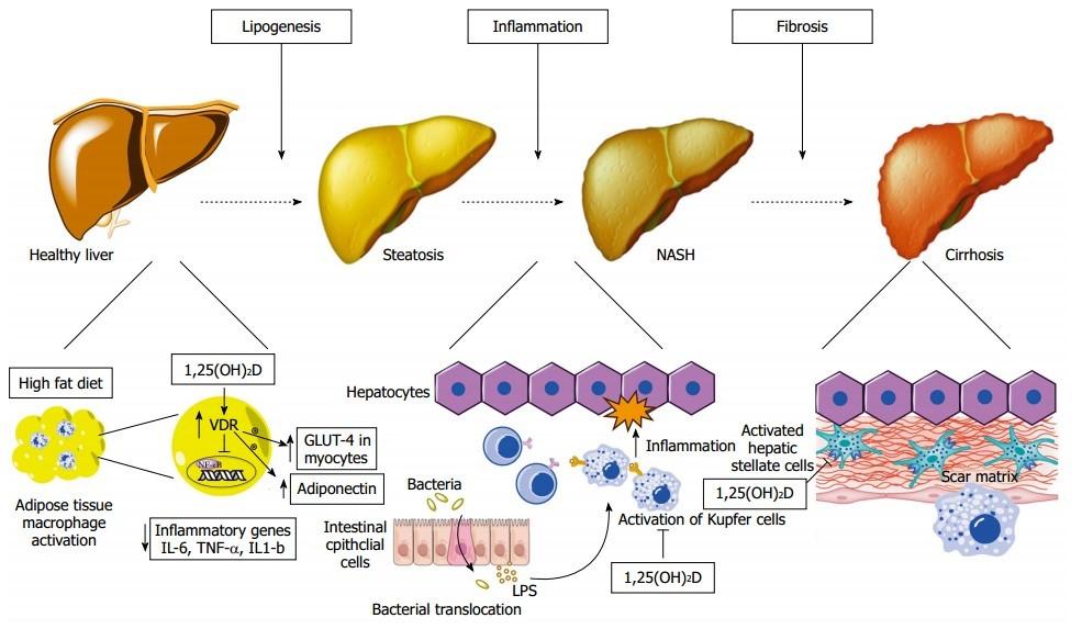 secosteroid hormone vitamin d3