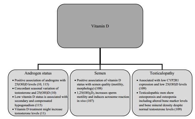 vitamin d sperm