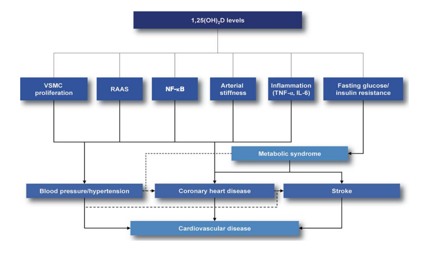 Vitamin D status and hypertension: a review