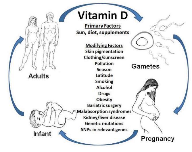 Vitamin D Deficiency During Pregnancy >> Vitamin D And Pregnancy Review Nov 2015