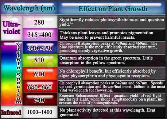 Plants And Uvb